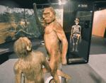 La Pineda hosts the exhibition Origins. Five milestones in human evolution'