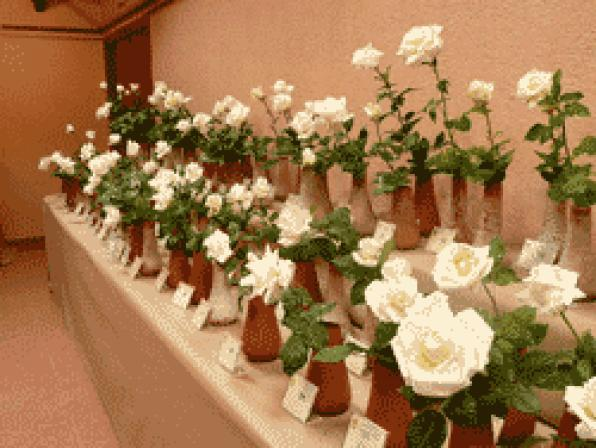 Everything ready for the 16th contest of the Roses Vendrell